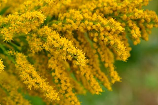 ブタクサの花粉で起こる体の不調 , 新宿駅から近い評判のよい